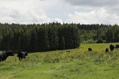 Herde auf der Weide