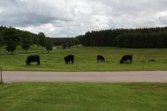 Herde mit Blick ins Tal